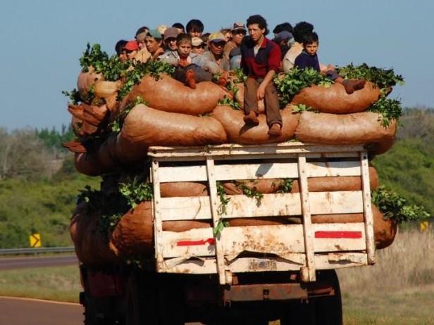 Trabajadoras y trabajadores rurales piden que subsidio intercosecha se garantice y se actualice por ley